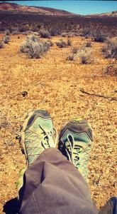 helping-desert-tortoises-4